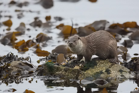otter 12 460px