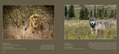 BVNF-NatuurlijkIV-screen-spread-preview-all-20161024-46.jpg