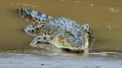 20180223-023-rudi-04-20180223-Crocodile.jpg